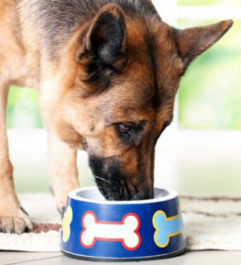 Сколько раз кормят собаку в день