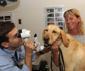 Как вылечить бельмо на глазу у собаки лекарственными и народными средствами