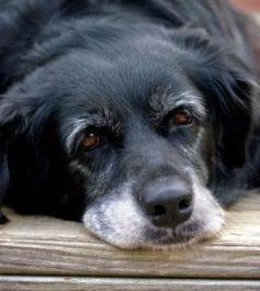 Чек и как кормить старую собаку