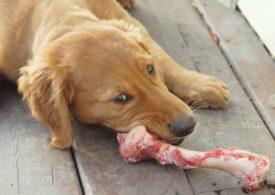 Можно ли давать собаке куриные кости