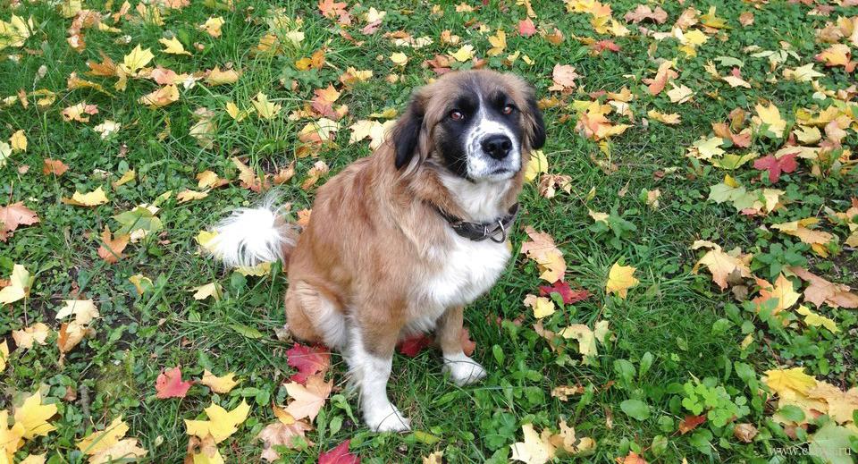 Профилактика дисплазии у собак