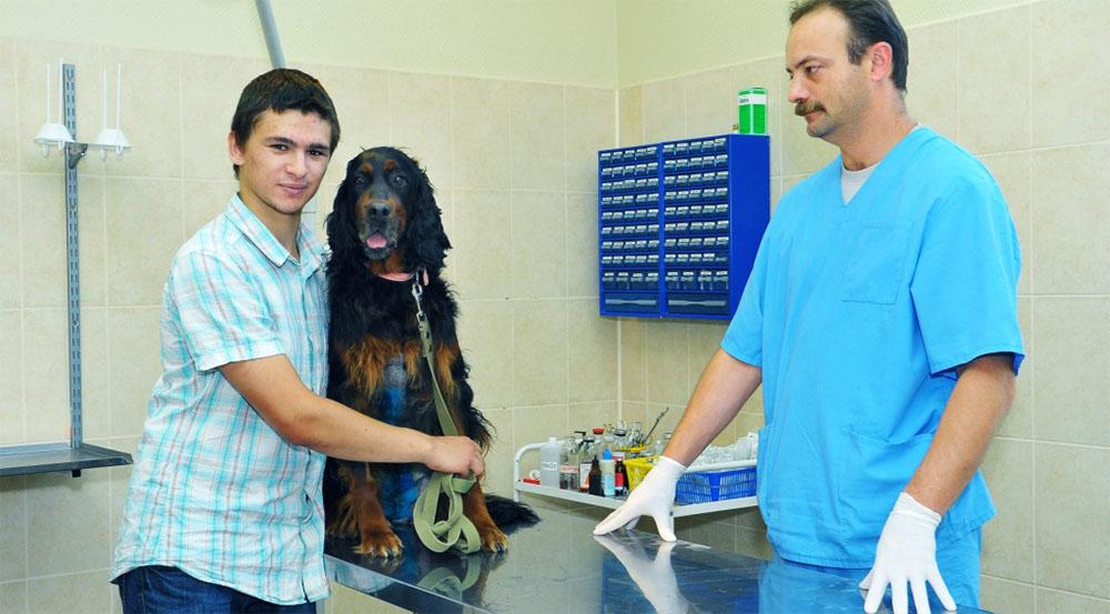 Плюсы кастрации собак