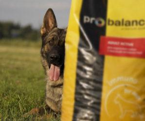 Корм Пробаланс для собак: обзор состава, цена и отзывы о продукции