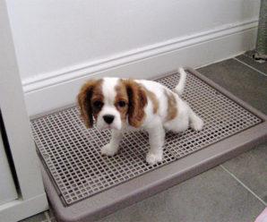 Туалет для собаки, приучаем собаку ходить на пленку