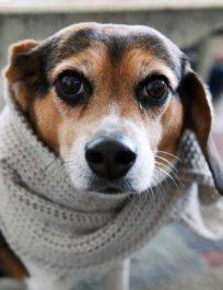 Причины простуды у собаки