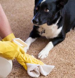 Почему собака писает и гадит дома