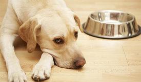 Энтероколит у собак