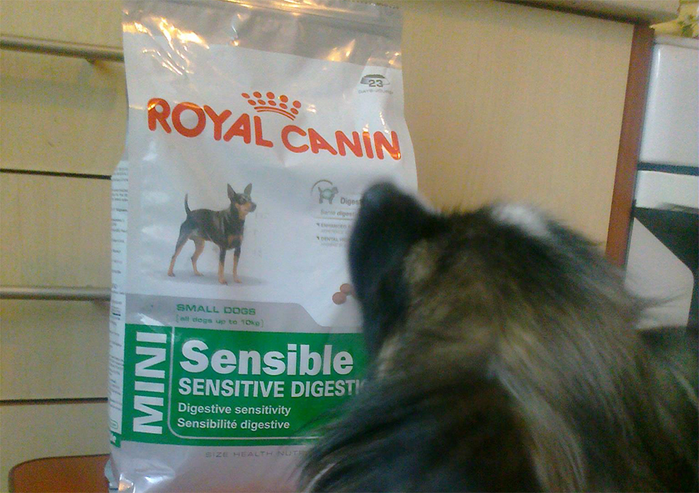 Как кормить щенка йоркширского терьера кормление щенков