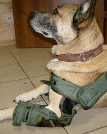 Лечение бурсита у собак