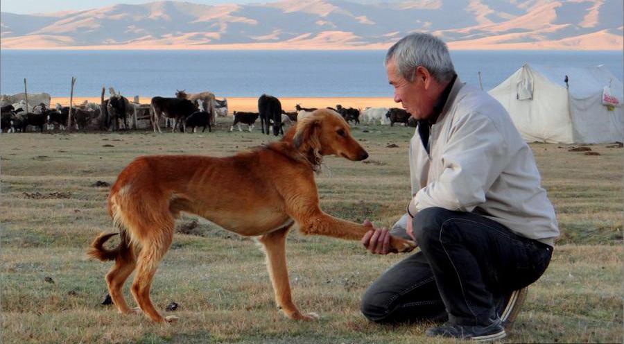 Собака дает лапу человеку