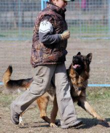 Собака и выполнение команды рядом
