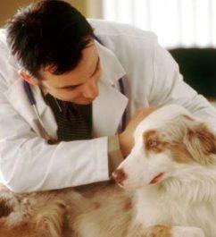 Способы диагностики липомы у собак