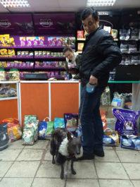 Витрина магазина с кормами для собак