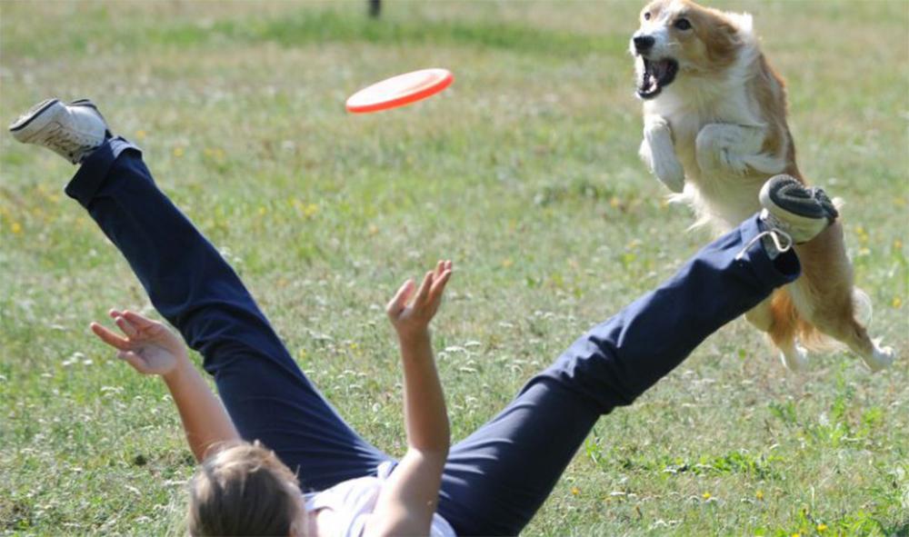 Активная игра с собакой