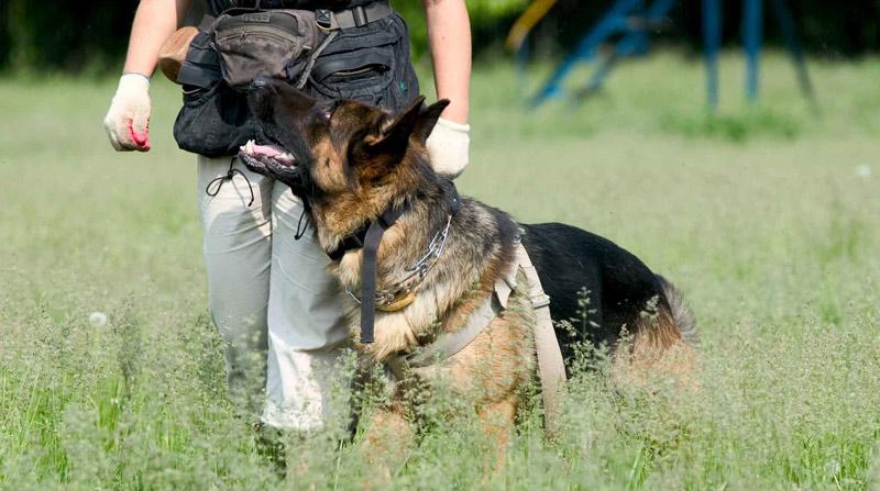 Как обучить собаку команде рядом