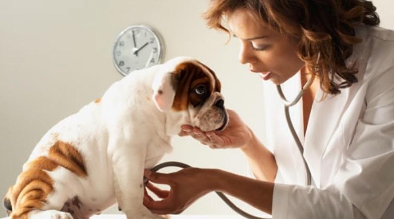 Лечение дипилидиоза у собак