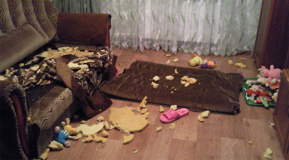 Собака разгрызла диван