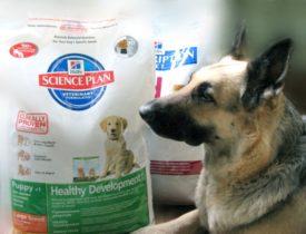 Отзывы ветеринаров о корме для собак Хиллс