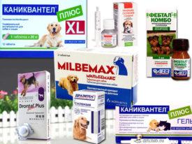 Схема дегельминтизации собак