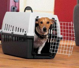 Первая помощь собаке при инсульте