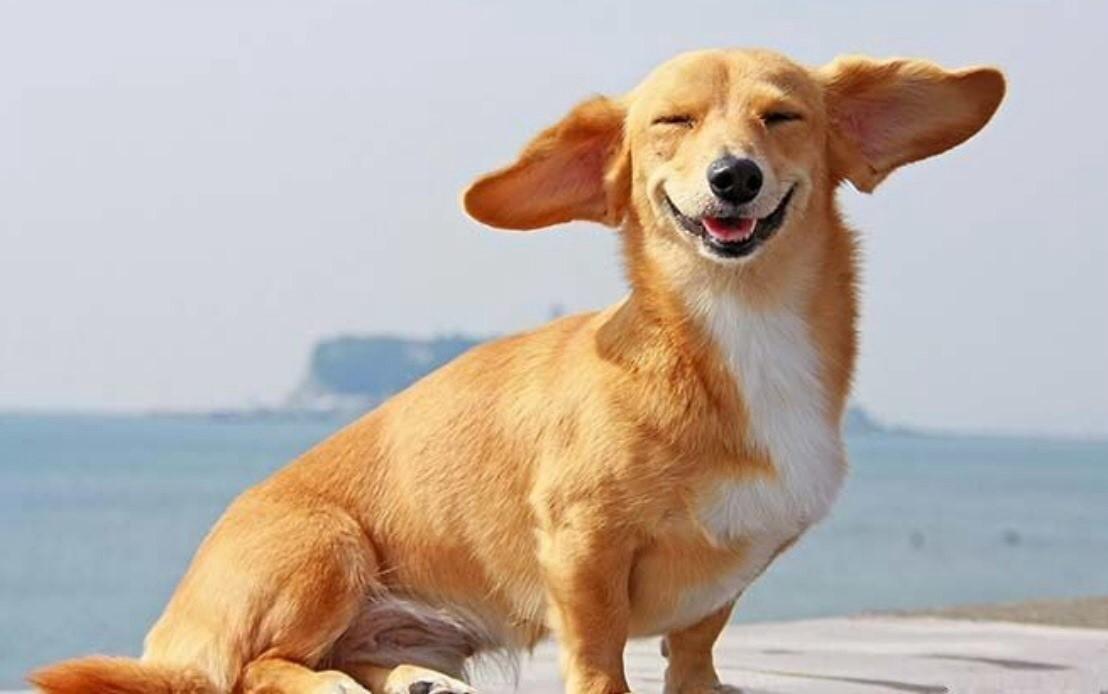 Причины покраснения глаза у собаки