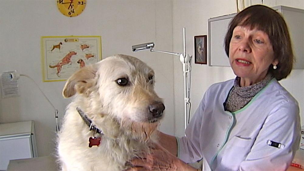 Лечение болезни Кушинга у собак