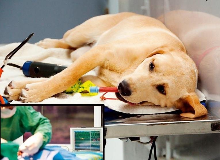 Лечение столбняка у собак
