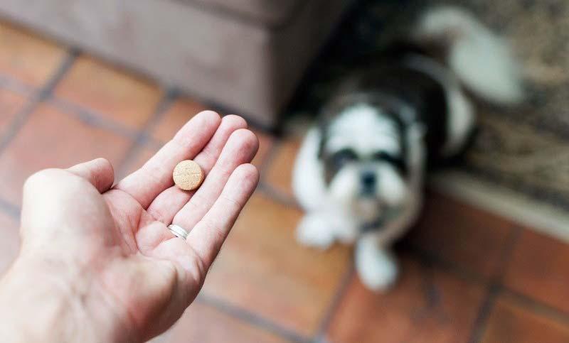Лечение кашля у собаки