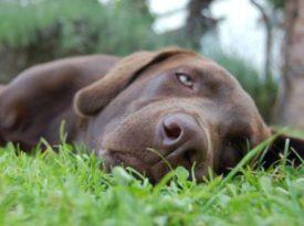 Классификация анемии у собак