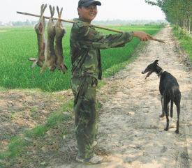 Грейхаунд на охоте