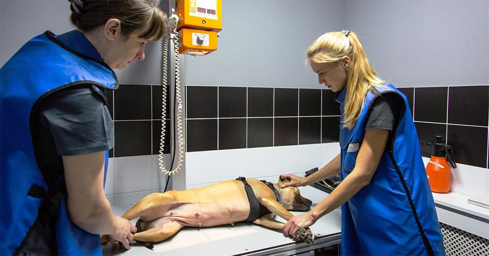 Рентгенологическое исследование собаки