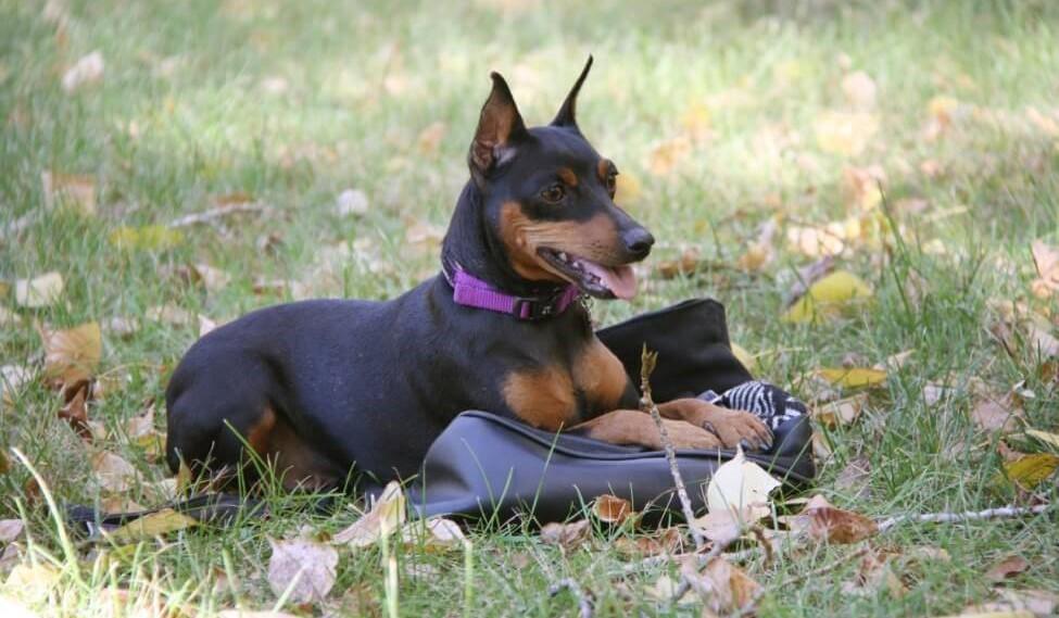 Обучение собаки команде Место