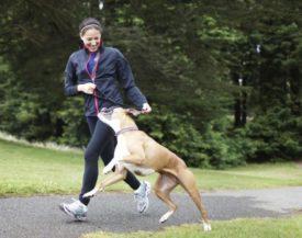 Как помочь собаке при икоте