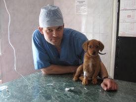 Отзывы ветеринаров о Мильбемаксе
