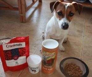Чем кормить джек рассел терьера: умное питание – здоровый пес