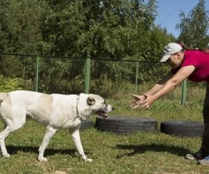 Как научить собаку команде «Ко мне»: основные принципы обучения