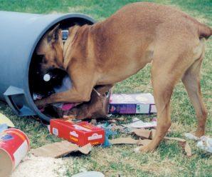 Если пес – «пылесос»: отучаем собаку подбирать еду на улице
