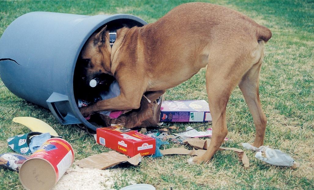 Собака подбирает еду на улице