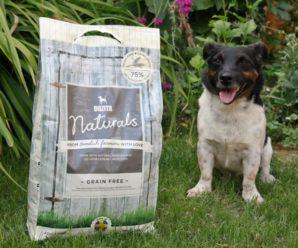 Корм для собак Bozita – из Швеции с любовью
