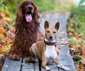 Собаки средних пород для квартиры