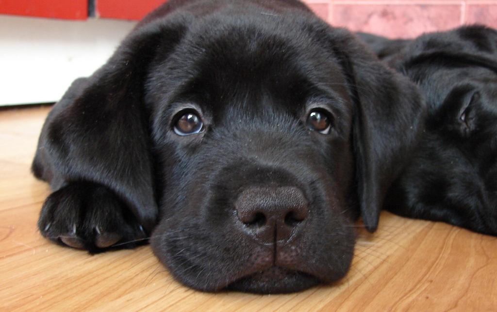 Последствия вакцинирования щенка