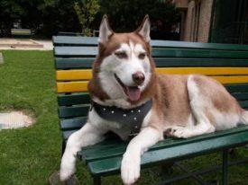 Красивые русские клички собак