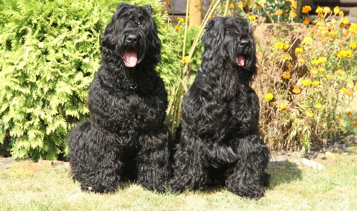Самые популярные русские клички для собак