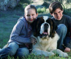 Собака породы сенбернар из фильма «Бетховен»