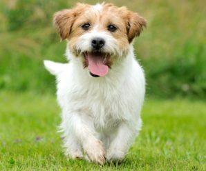 Самые прикольные и забавные клички для собак