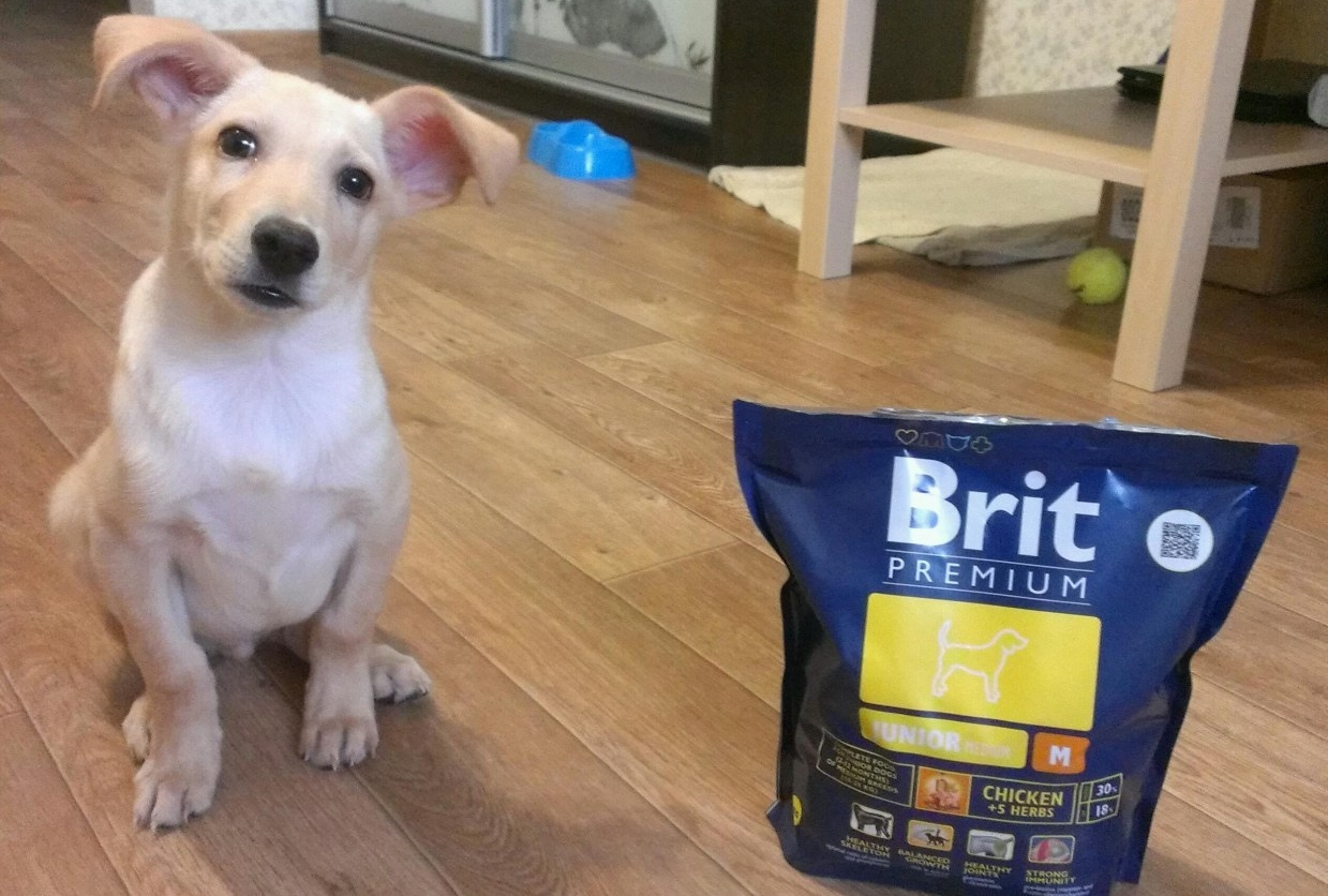 Линейка кормов Brit Premium