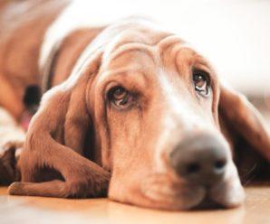 Депрессия у собак: основные причины развития и методы помощи