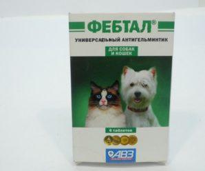 Препарат для собак Фебтал: инструкция и показания к применению