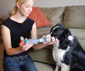 Бронхиальная астма – причины появления, симптомы, диагностирование, лечение