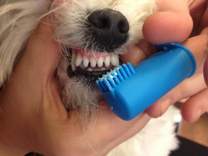 Для зубов маленьким собакам